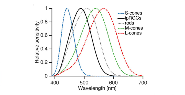 Sensitivity peaks of the different types of photoreceptors in the human eye