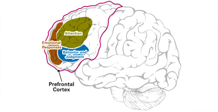 prefrontal cortex controls